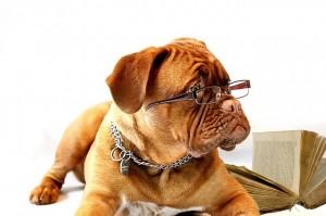 Vprašanja za vodnike psa spremljevalca B-BH